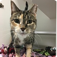 Adopt A Pet :: Miss Piggy - Reisterstown, MD
