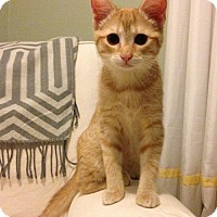 Adopt A Pet :: Annie - Potomac, MD