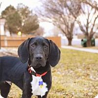 Adopt A Pet :: Bowen - Salt Lake City, UT
