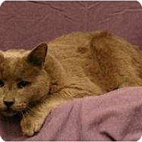 Adopt A Pet :: Smoky - Sacramento, CA