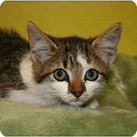 Adopt A Pet :: MARGARET - SILVER SPRING, MD