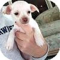 Adopt A Pet :: Baby Sophie - Marlton, NJ