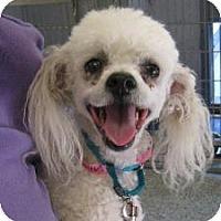 Adopt A Pet :: Ginger Rogers - Long Beach, CA