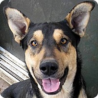 Adopt A Pet :: Bronco - Oakley, CA