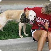 Adopt A Pet :: Scout - Cumming, GA