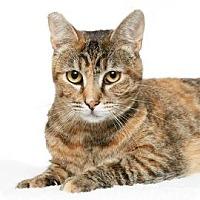 Adopt A Pet :: Monique - Santa Monica, CA
