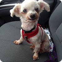 Adopt A Pet :: Leia - Marietta, GA