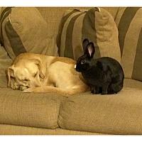 Adopt A Pet :: Simi - Williston, FL