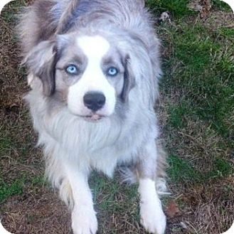 Vancouver Dog Rescue Adoption