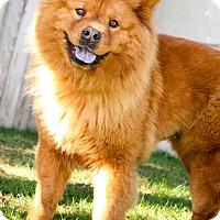 Adopt A Pet :: Josie - Sacramento, CA