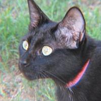 Adopt A Pet :: Sarah - Gonzales, TX