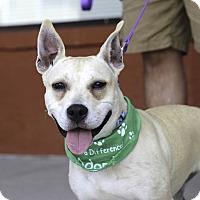 Adopt A Pet :: Willow - Alpharetta, GA