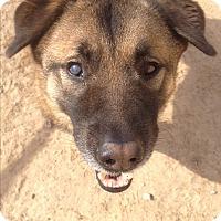 Adopt A Pet :: Buddy - West Columbia, SC