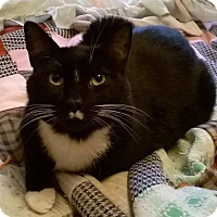 Adopt A Pet :: Rascal - Vancouver, WA