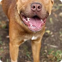 Adopt A Pet :: Lorenzi - San Diego, CA