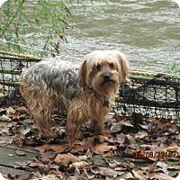 Adopt A Pet :: Frankie - Williston Park, NY