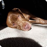 Adopt A Pet :: Brody (Courtesy Post) - Leonardtown, MD