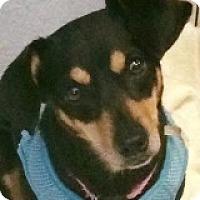 Adopt A Pet :: Selma Smooch - Houston, TX