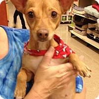 Adopt A Pet :: Rose - Bedford, TX