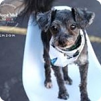 Adopt A Pet :: Benson - Shawnee Mission, KS