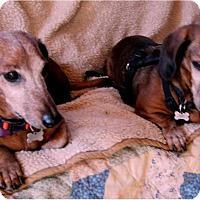 Adopt A Pet :: Alex - Tucson, AZ