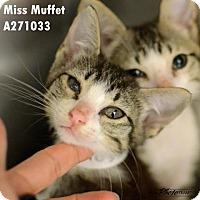 Adopt A Pet :: KAIA - Conroe, TX