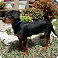 Adopt A Pet :: Dotson - Tyler, TX