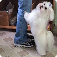 Adopt A Pet :: Zoey - Palm City, FL