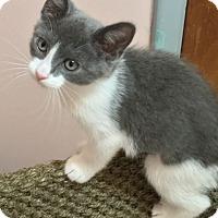 Adopt A Pet :: Dixie - Colmar, PA