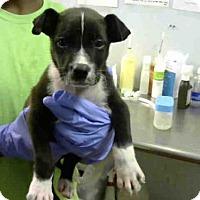 Adopt A Pet :: RYDER - Atlanta, GA
