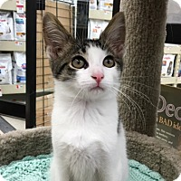 Adopt A Pet :: Albert - Warren, OH