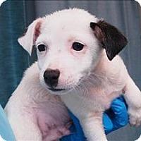 Adopt A Pet :: Everett - Portland, OR
