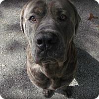 Adopt A Pet :: Roscoe - Muskegon, MI