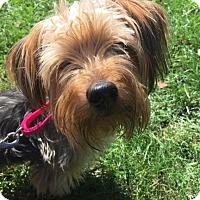 Adopt A Pet :: Balero - Pittsburgh, PA