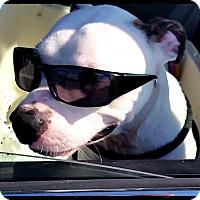 Adopt A Pet :: Junior - Johnson City, TX