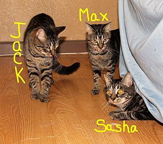 Domestic Shorthair Cat for adoption in Jesup, Georgia - Jack