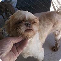 Adopt A Pet :: Tiffany - Bonifay, FL