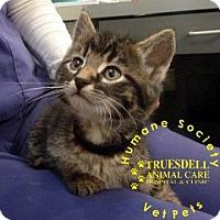 Adopt A Pet :: Tinsel - Janesville, WI