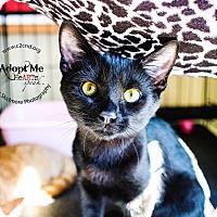 Adopt A Pet :: A..  Asher - Mooresville, NC
