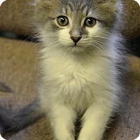 Adopt A Pet :: Tree - Michigan City, IN