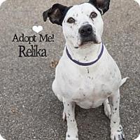 Adopt A Pet :: Relika - West Des Moines, IA