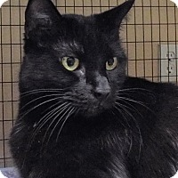 Adopt A Pet :: Hailey - Grants Pass, OR