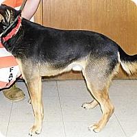 Adopt A Pet :: Max - Washington Court House, OH
