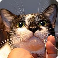 Adopt A Pet :: Sophia - Brooklyn, NY