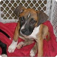 Adopt A Pet :: Maddie - Reisterstown, MD