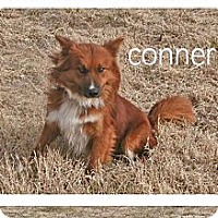 Adopt A Pet :: Conner - Conway, AR