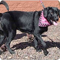Adopt A Pet :: Minnie - in Flagstaff - Scottsdale, AZ