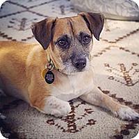 Adopt A Pet :: Cooper - Orange, CA