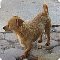 Adopt A Pet :: Rusty - San Ysidro, CA