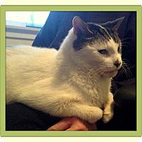 Adopt A Pet :: Lefty - Trevose, PA